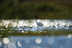 Bird in Milford, DE