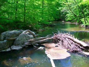 Tree on River