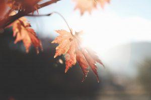 A very bright Sun shines on an autumn leaf