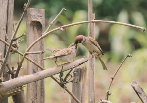 Two bird on a wooden structure