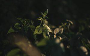 Warm green plants in the sun