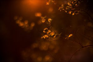 Warm, orange sunlight highlights leaves on branches