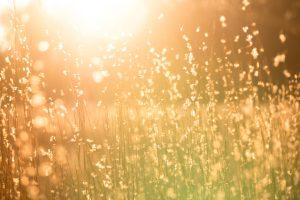 Bright warm sunlight illuminates plants