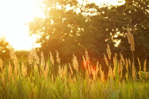 The Sun shining brightly upon grasses