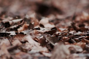 Dried leaves scatter the autumn forest