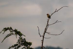 A small bird perches itself upon a tree branch