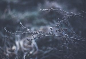 Branches frozen in the cold