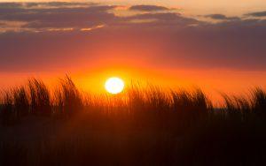 A bright sun illuminates tall grasses