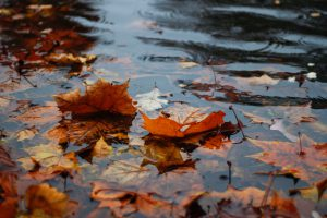Autumn leaves submerged in water