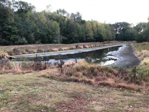 Low water level in a wet pond.
