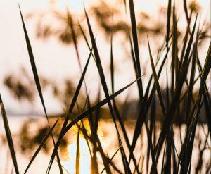 Grass in water illuminated by sun