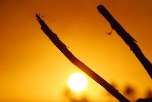 Warm sun paints sky golden