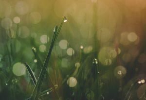 Wet rain on fresh grass